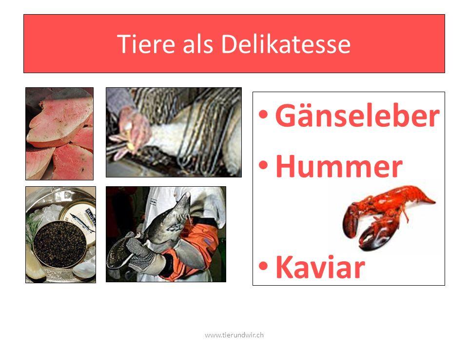 Gänseleber Hummer Kaviar Tiere als Delikatesse