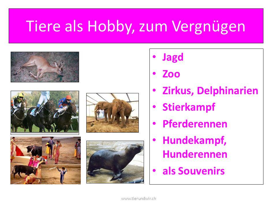 Tiere als Hobby, zum Vergnügen