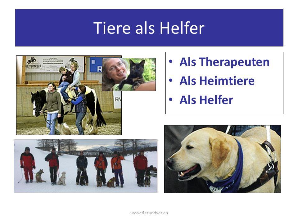 Tiere als Helfer Als Therapeuten Als Heimtiere Als Helfer