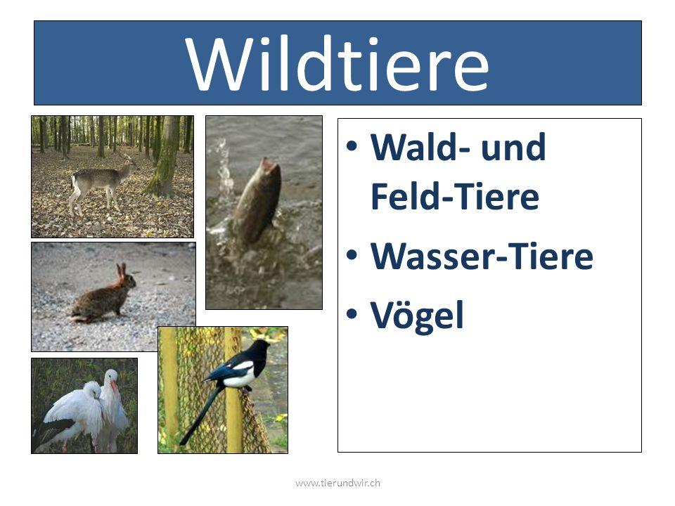 Wildtiere Wald- und Feld-Tiere Wasser-Tiere Vögel