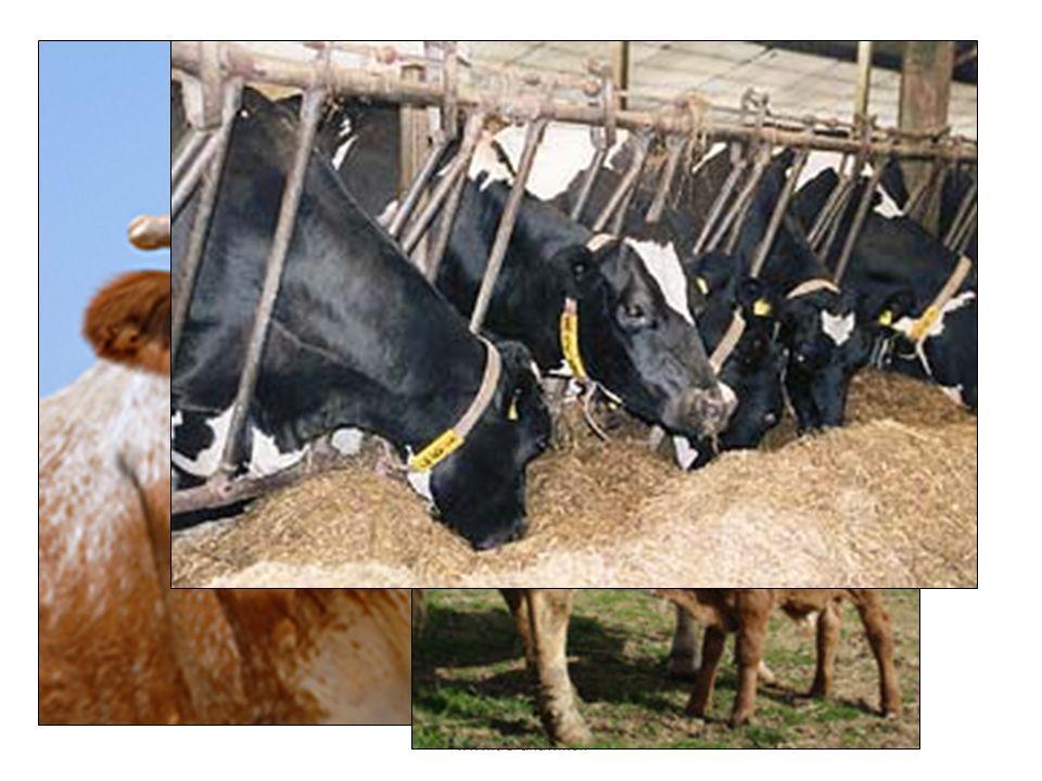 Was wisst Ihr über die Kühe