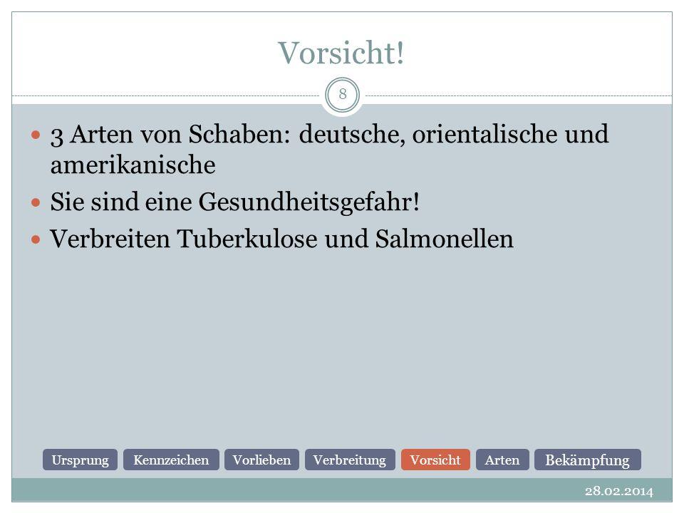 Vorsicht! 3 Arten von Schaben: deutsche, orientalische und amerikanische. Sie sind eine Gesundheitsgefahr!
