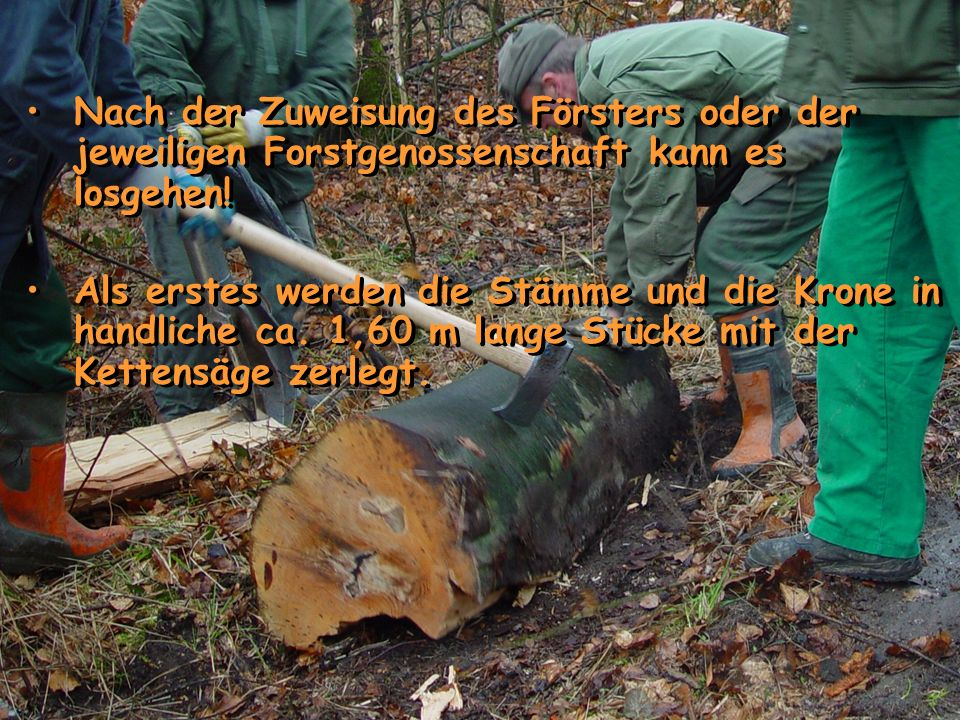 Nach der Zuweisung des Försters oder der jeweiligen Forstgenossenschaft kann es losgehen!