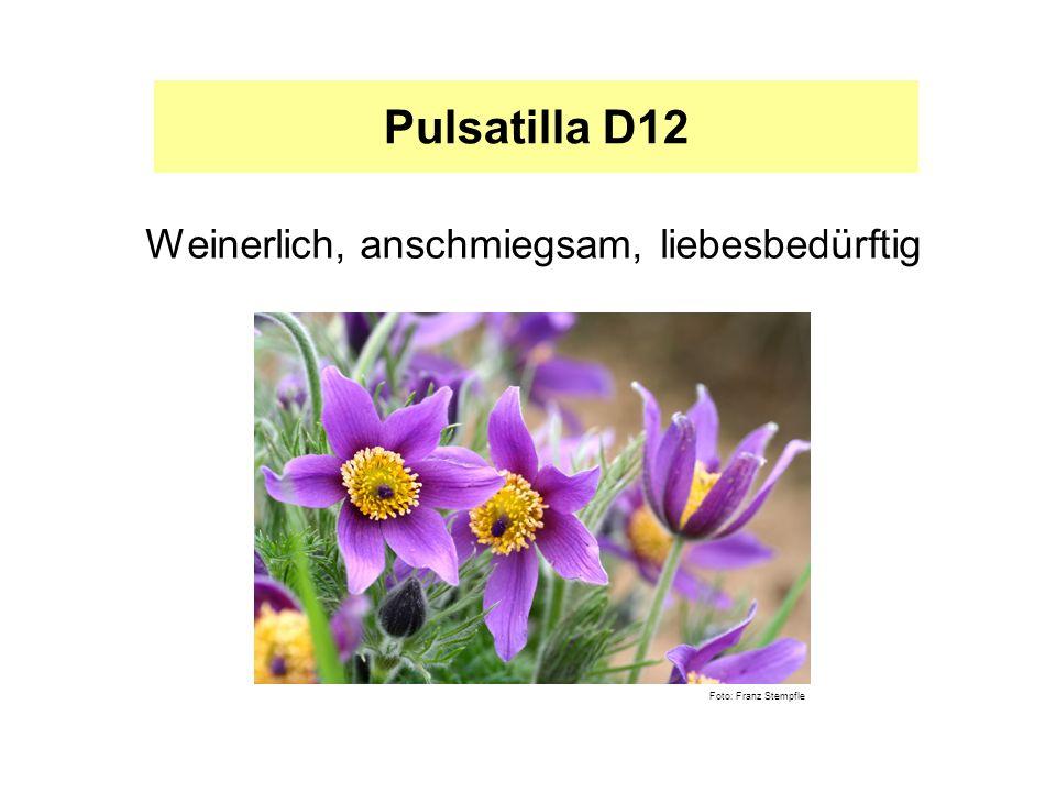 Pulsatilla D12 Weinerlich, anschmiegsam, liebesbedürftig