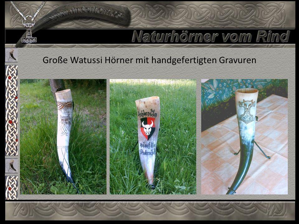 Große Watussi Hörner mit handgefertigten Gravuren