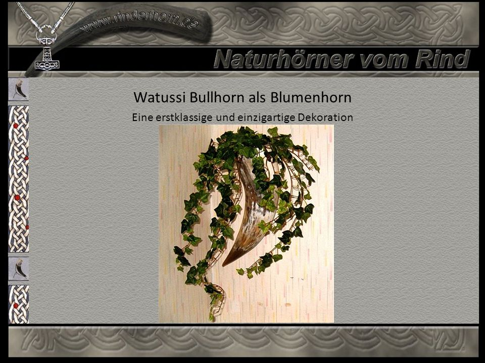 Watussi Bullhorn als Blumenhorn