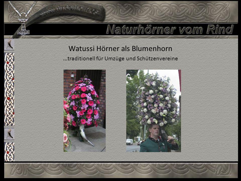 Watussi Hörner als Blumenhorn