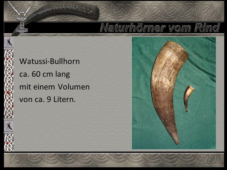 Watussi-Bullhorn ca. 60 cm lang mit einem Volumen von ca. 9 Litern.