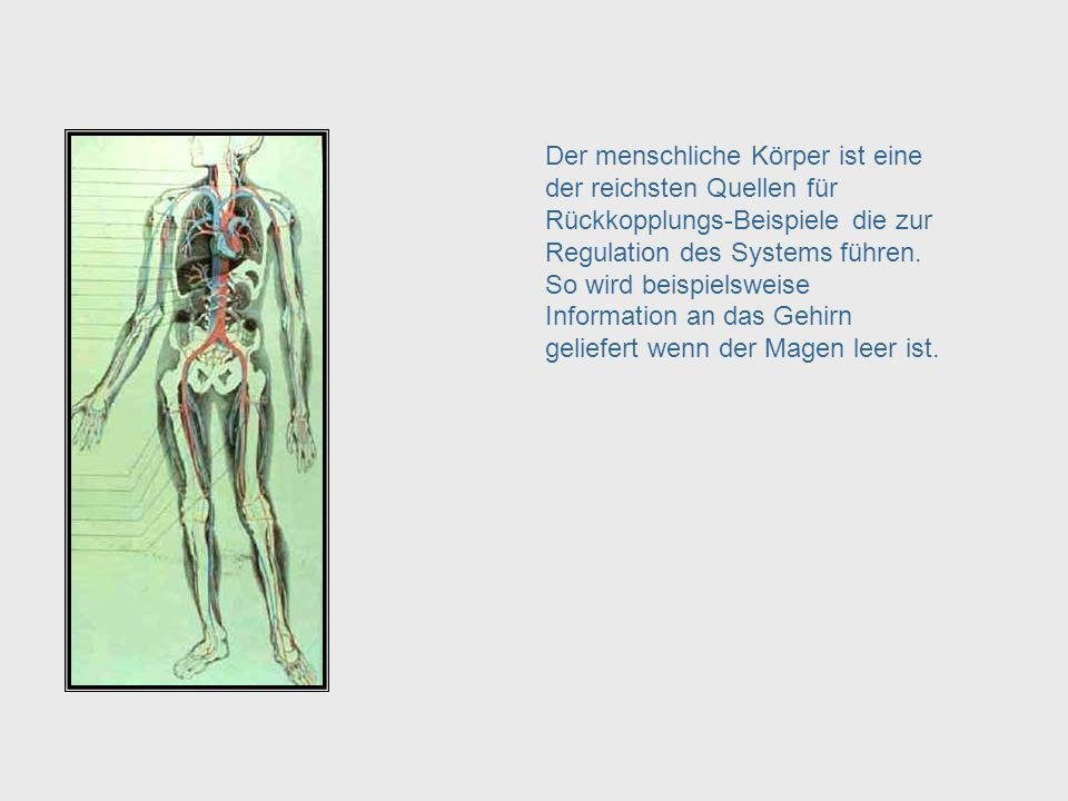 Human Body – Feedback Leading to System Regulation