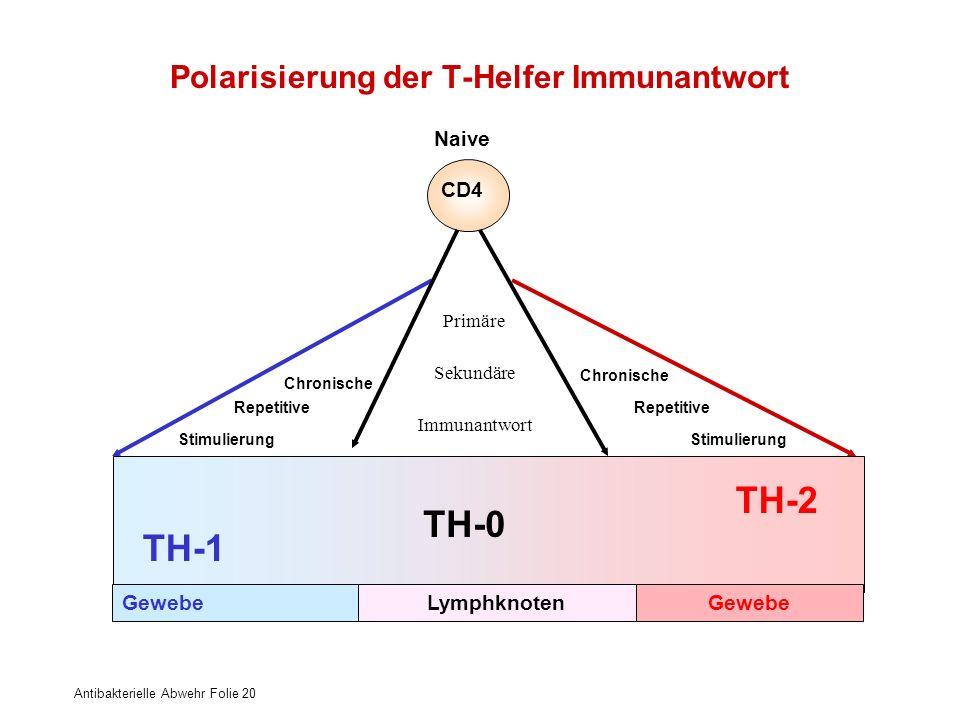 Polarisierung der T-Helfer Immunantwort