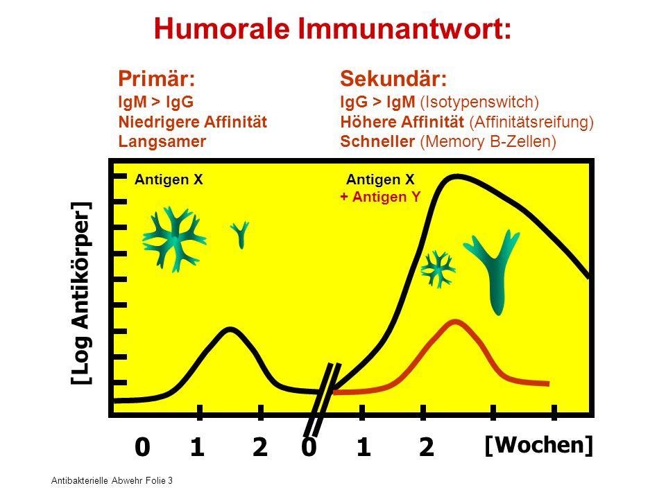 Humorale Immunantwort: