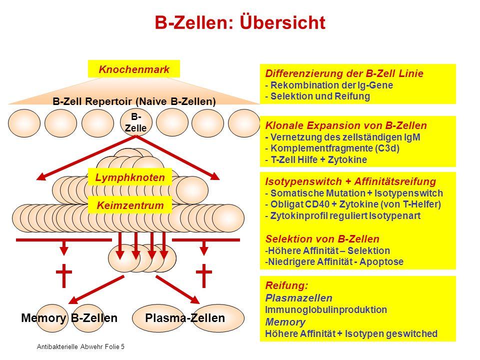 B-Zell Repertoir (Naive B-Zellen)