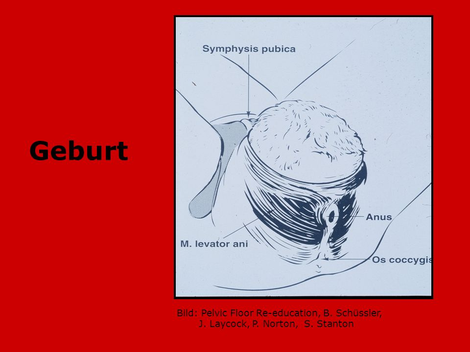 Geburt Bild: Pelvic Floor Re-education, B. Schüssler,