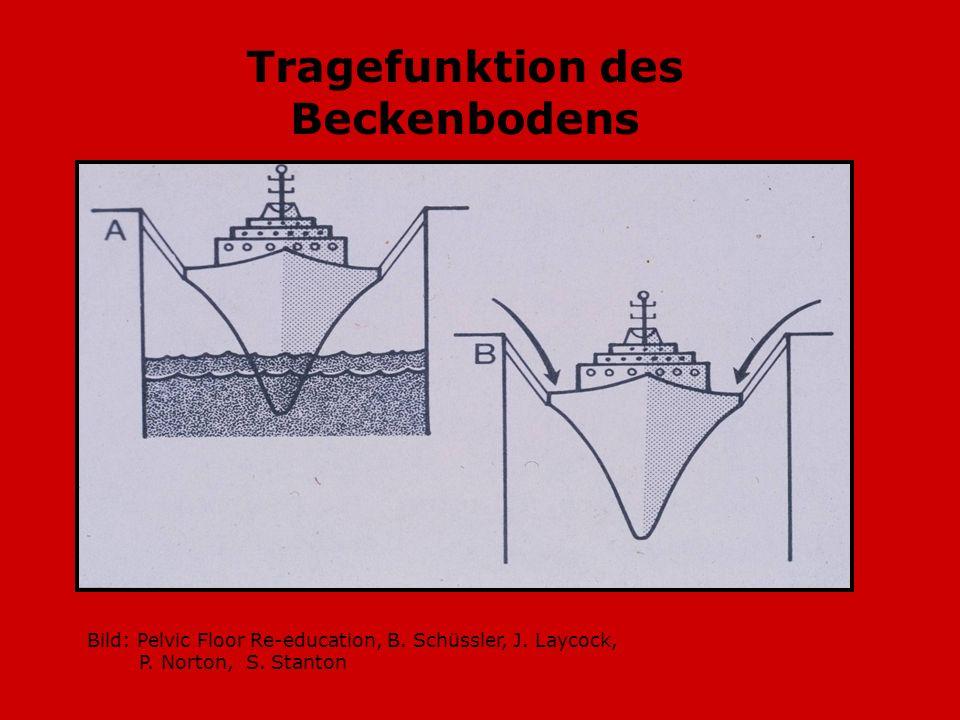 Tragefunktion des Beckenbodens
