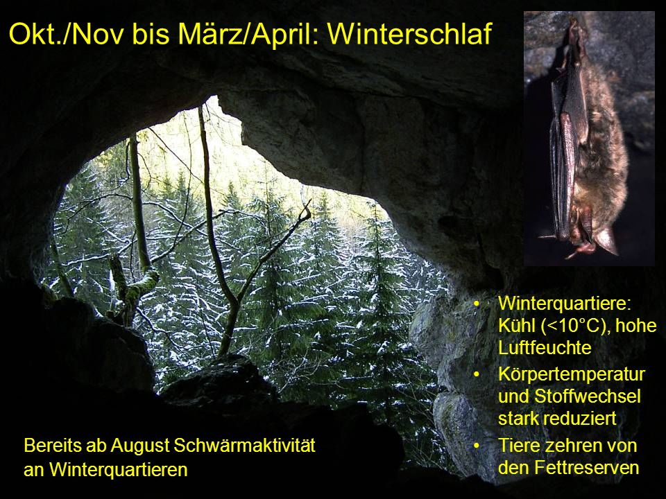 Okt./Nov bis März/April: Winterschlaf