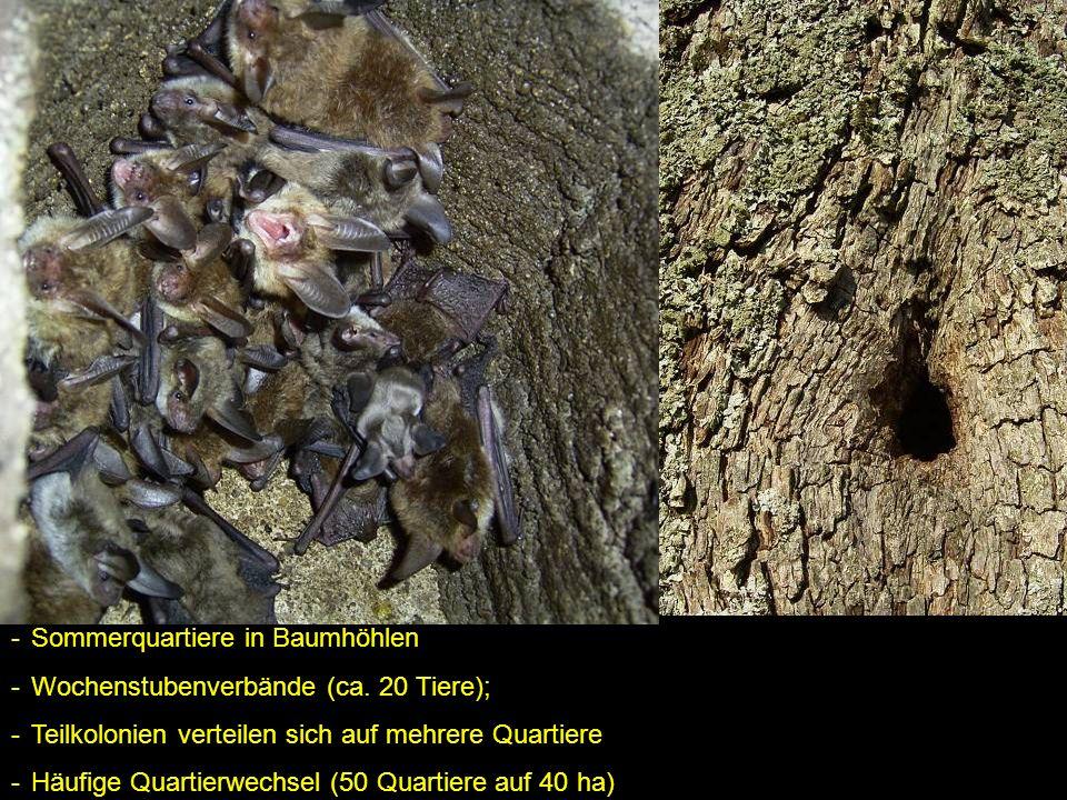 Sommerquartiere in Baumhöhlen