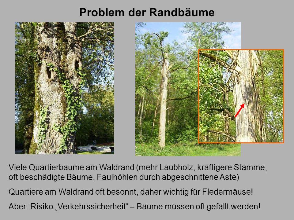 Problem der RandbäumeViele Quartierbäume am Waldrand (mehr Laubholz, kräftigere Stämme, oft beschädigte Bäume, Faulhöhlen durch abgeschnittene Äste)