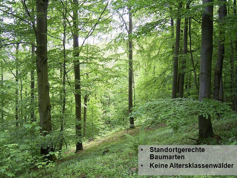 Standortgerechte Baumarten