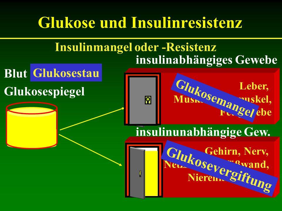 Glukose und Insulinresistenz