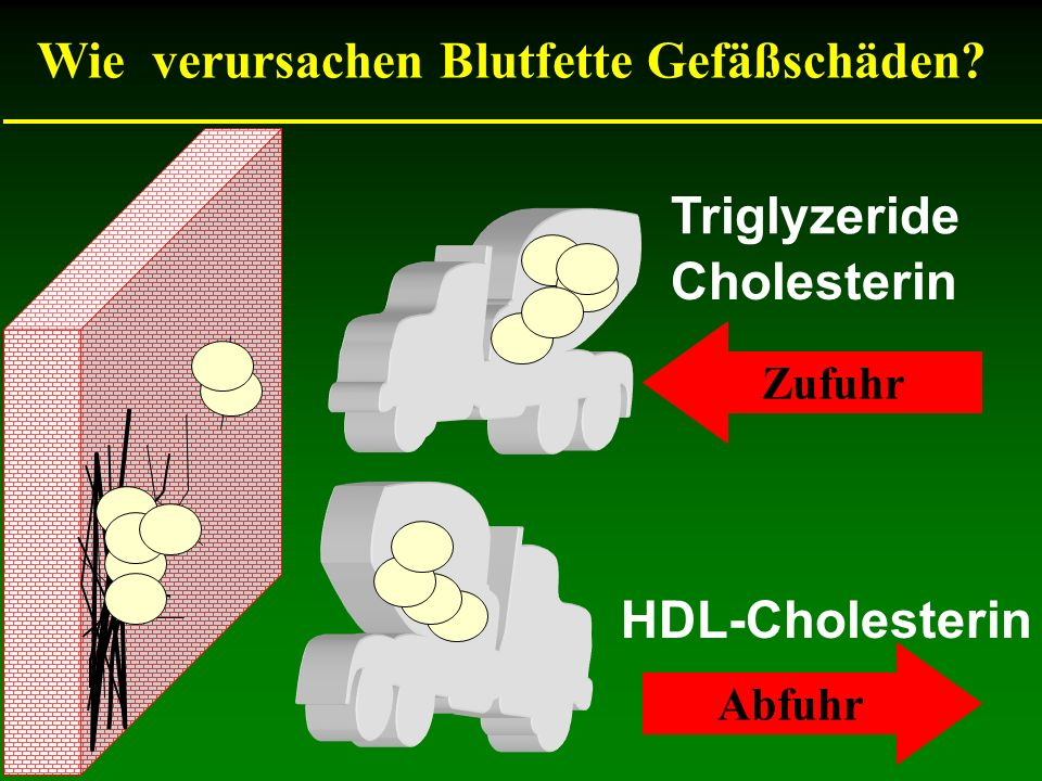 Wie verursachen Blutfette Gefäßschäden