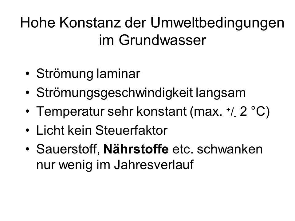 Hohe Konstanz der Umweltbedingungen im Grundwasser