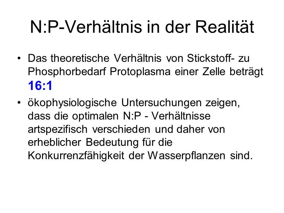 N:P-Verhältnis in der Realität
