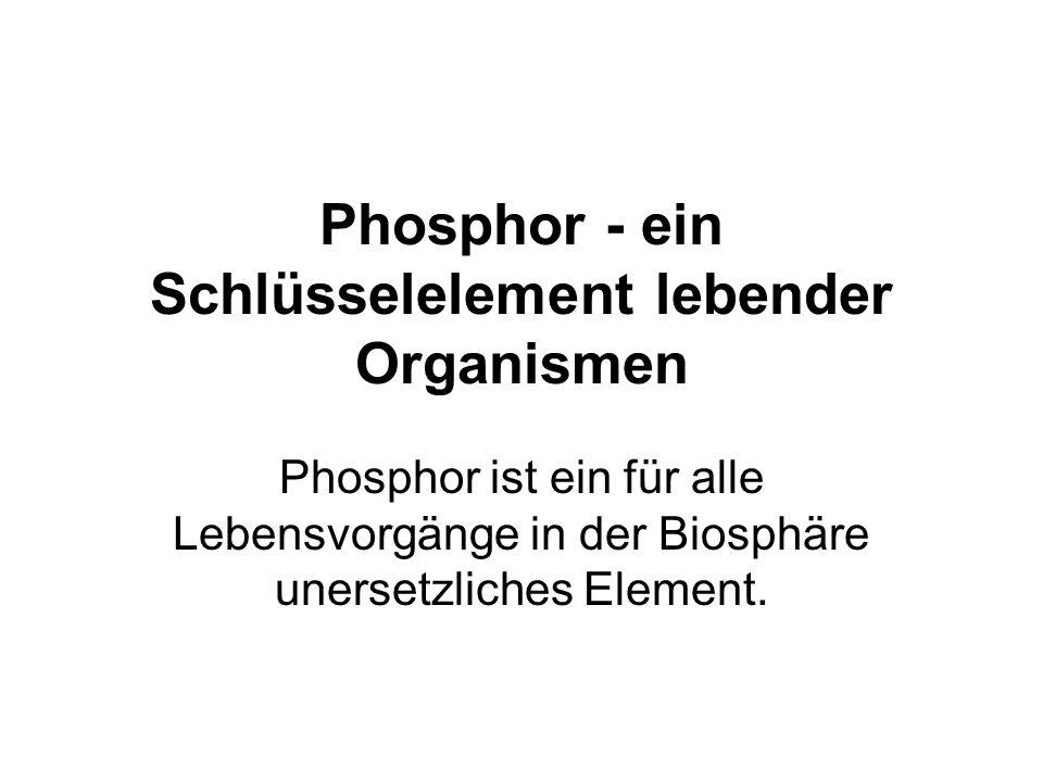 Phosphor - ein Schlüsselelement lebender Organismen