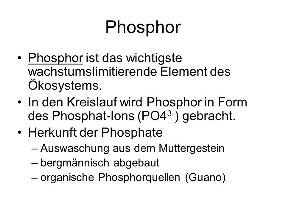 Phosphor Phosphor ist das wichtigste wachstumslimitierende Element des Ökosystems.
