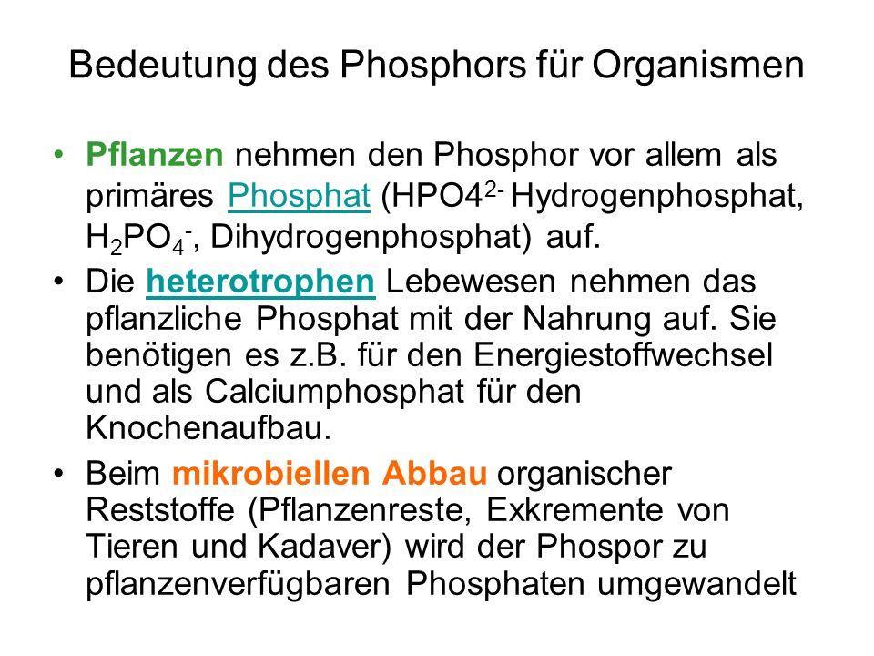 Bedeutung des Phosphors für Organismen
