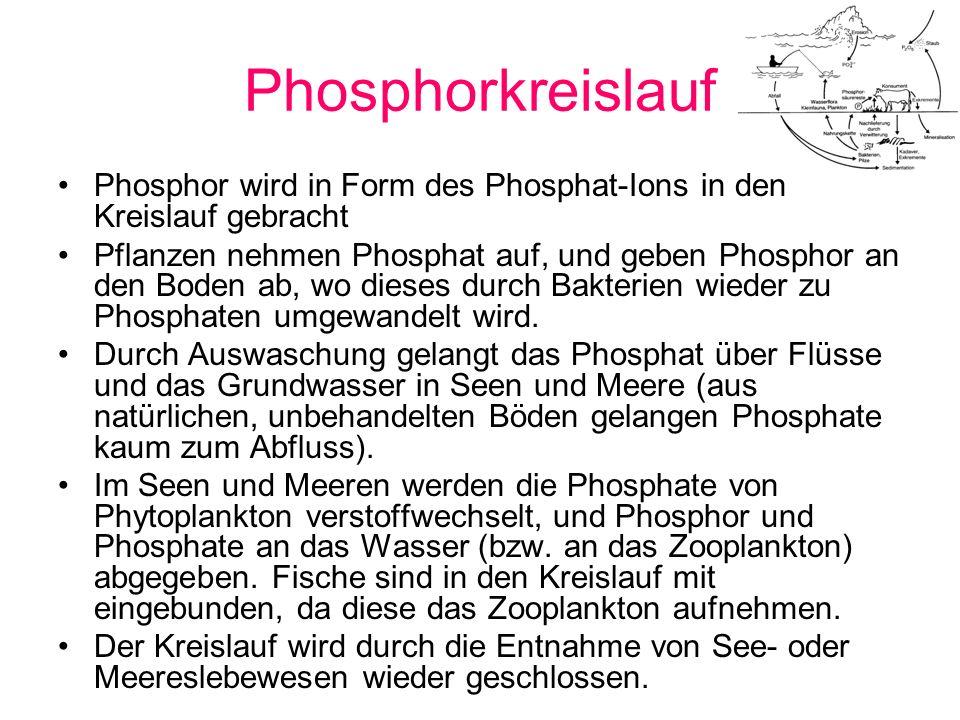 Phosphorkreislauf Phosphor wird in Form des Phosphat-Ions in den Kreislauf gebracht.