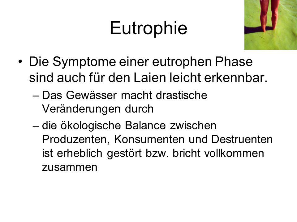 Eutrophie Die Symptome einer eutrophen Phase sind auch für den Laien leicht erkennbar. Das Gewässer macht drastische Veränderungen durch.