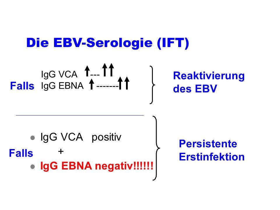 Die EBV-Serologie (IFT)
