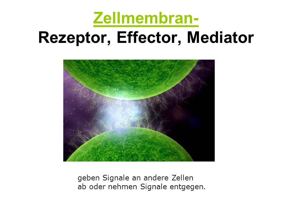 Zellmembran- Rezeptor, Effector, Mediator