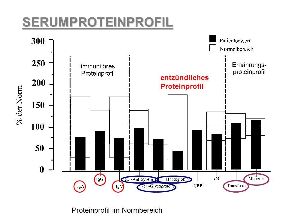 Proteinprofil im Normbereich
