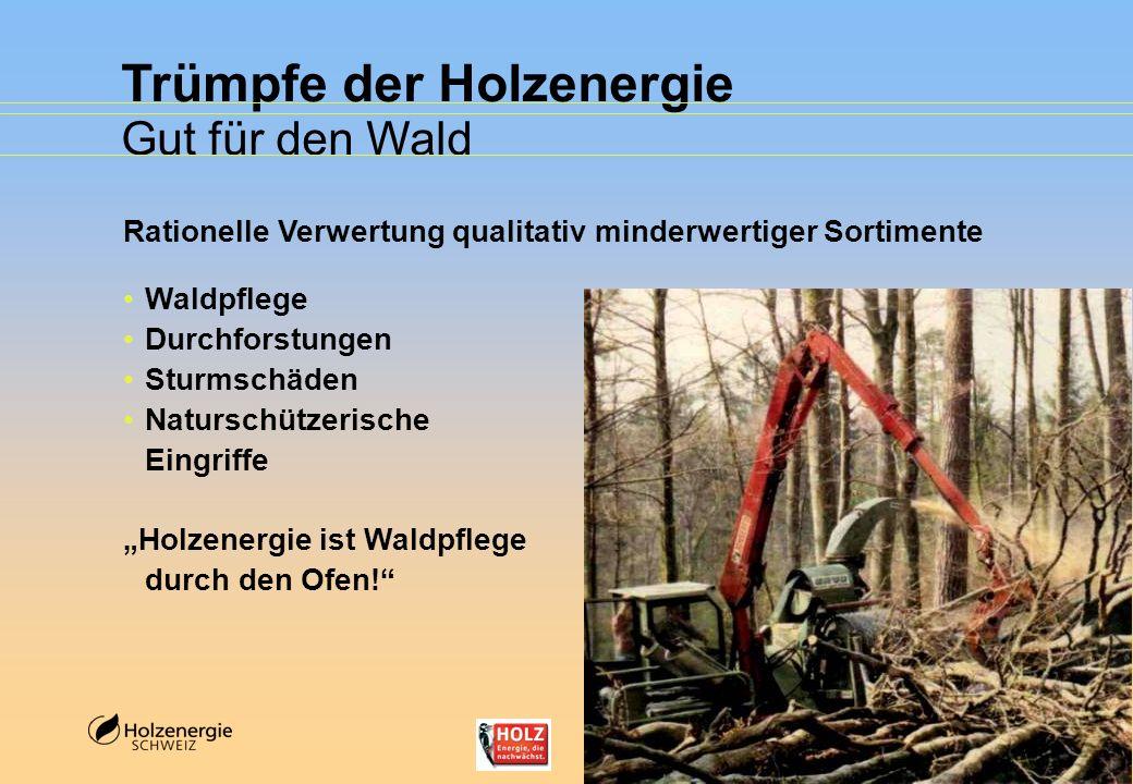 Trümpfe der Holzenergie