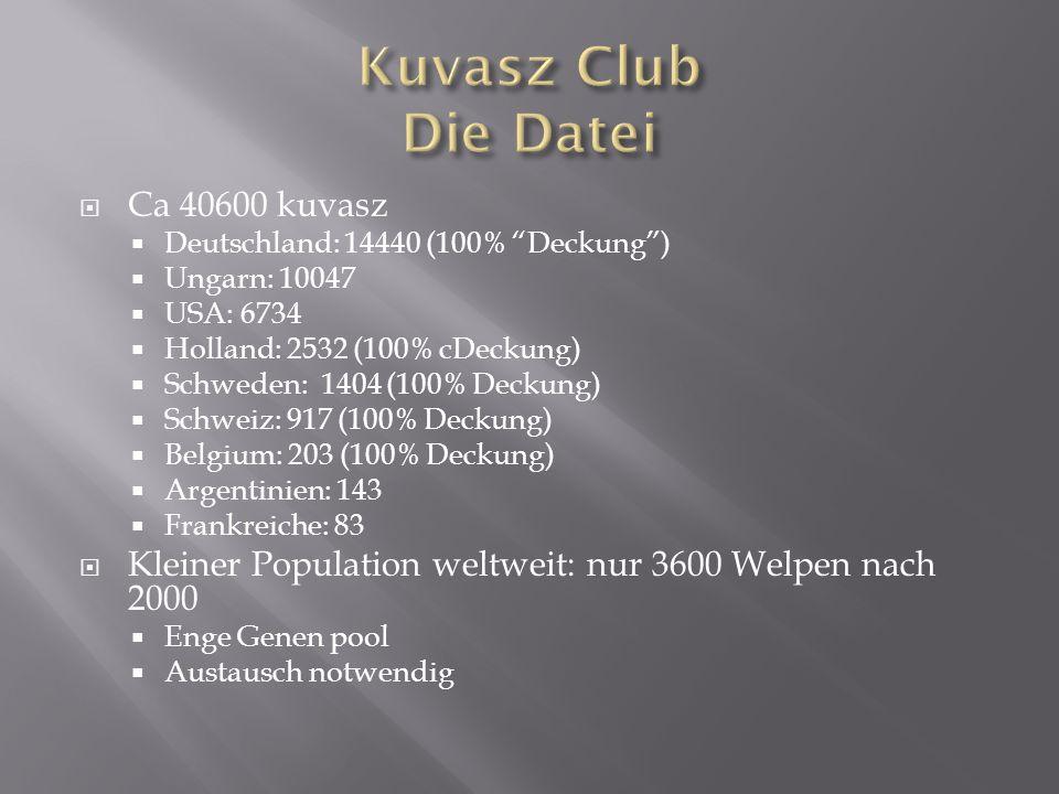Kuvasz Club Die Datei Ca 40600 kuvasz