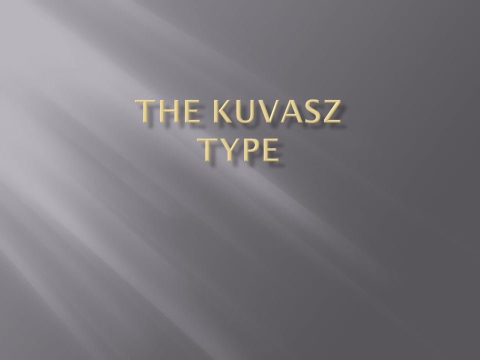The Kuvasz Type
