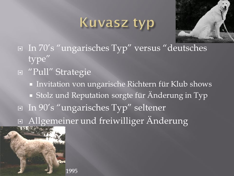 Kuvasz typ In 70's ungarisches Typ versus deutsches type
