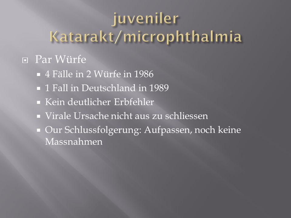 juveniler Katarakt/microphthalmia