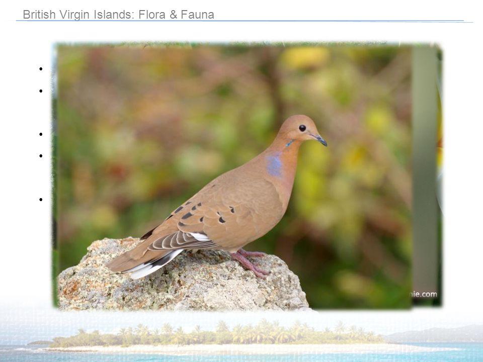 British Virgin Islands: Flora & Fauna
