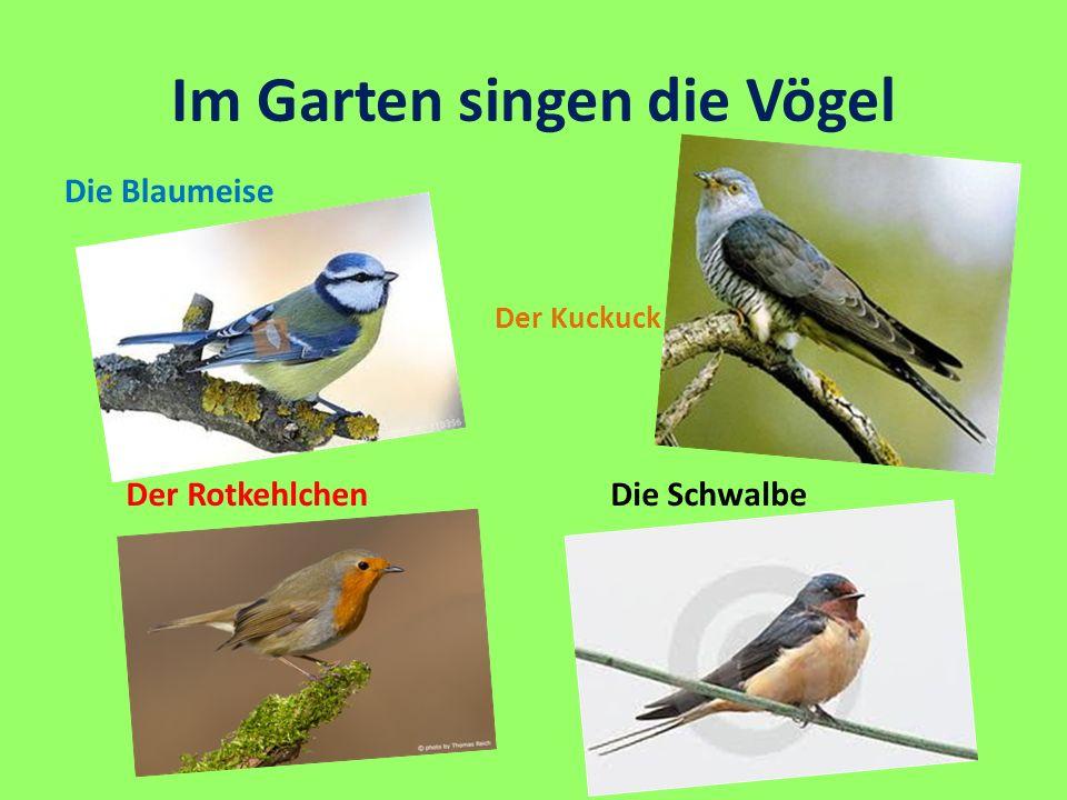 Im Garten singen die Vögel