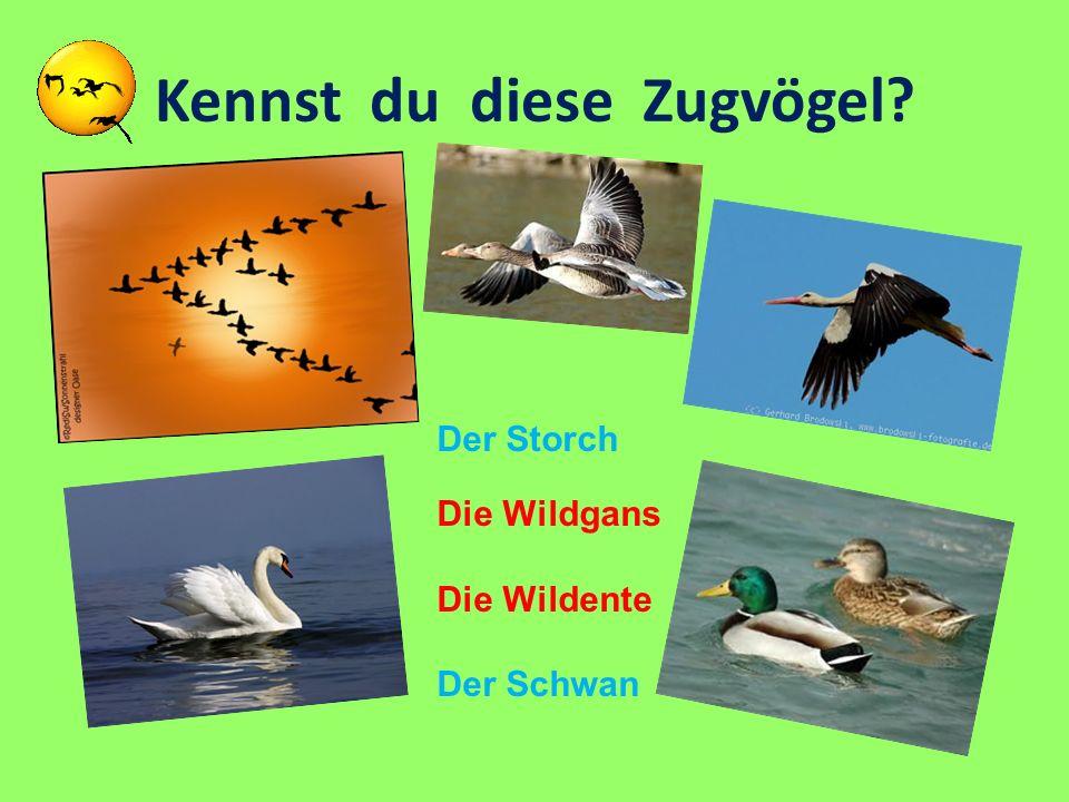 Kennst du diese Zugvögel