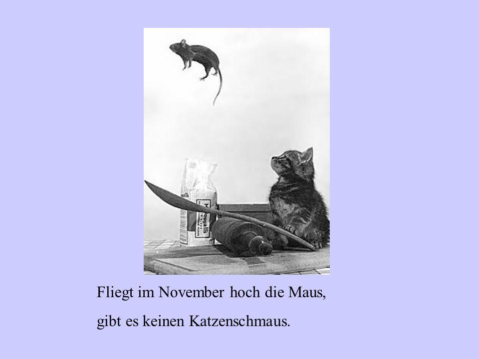 Fliegt im November hoch die Maus,