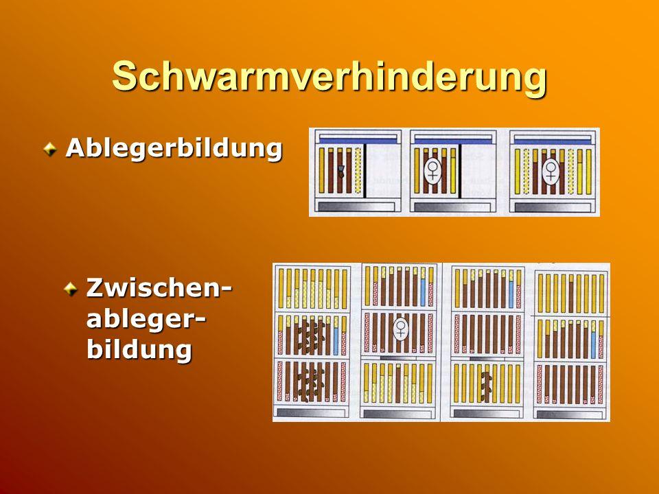 Schwarmverhinderung Ablegerbildung Zwischen-ableger-bildung
