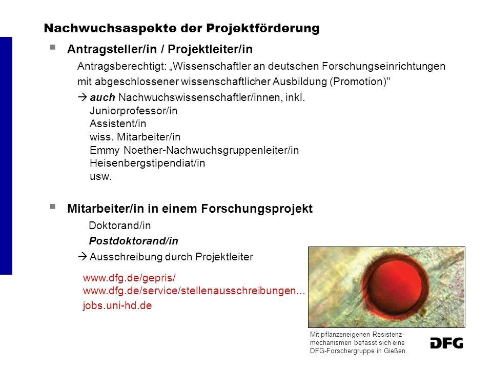 Nachwuchsaspekte der Projektförderung