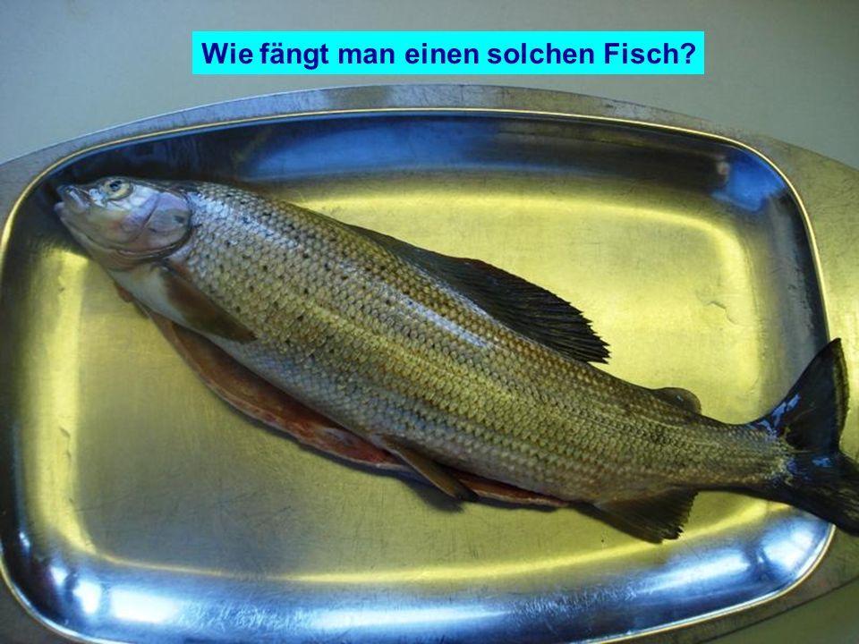 Wie fängt man einen solchen Fisch
