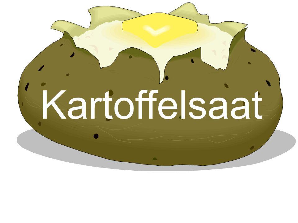 Kartoffelsaat