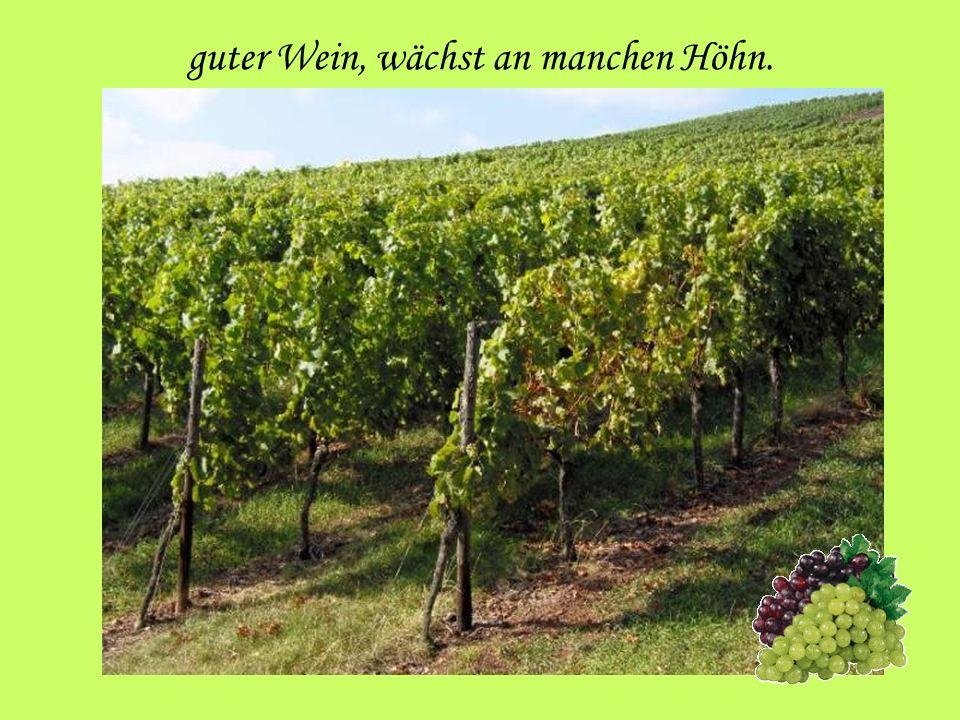 guter Wein, wächst an manchen Höhn.