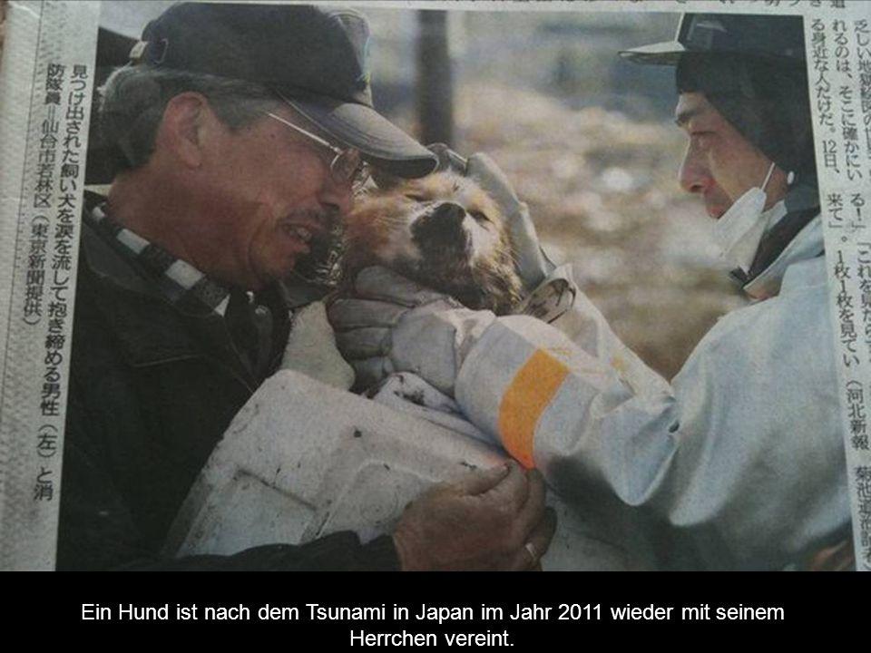 Ein Hund ist nach dem Tsunami in Japan im Jahr 2011 wieder mit seinem