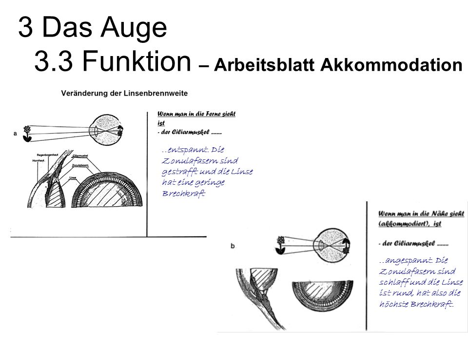 Arbeitsblatt Auge Klasse 2 : Biologie epoche ii von tim j peters ppt video